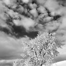 Winter Clouds by Angelika  Vogel