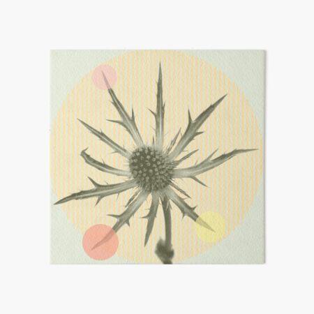 Distel mit Pastell Punkten  Galeriedruck