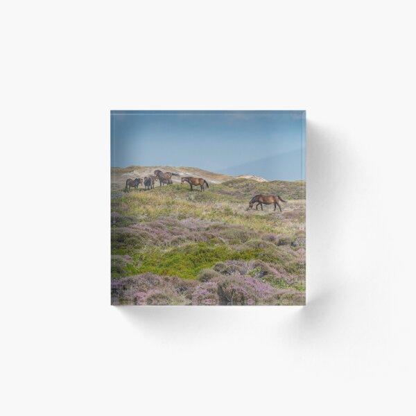 Wild horses on beautiful heathland Acrylic Block
