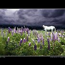White Horse in a Lupine Dream Poster by Wayne King