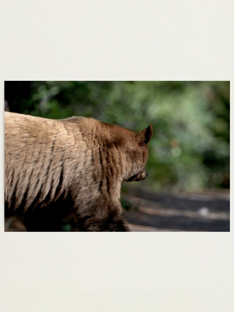 Alternate view of Grizzly Bear Photographic Print