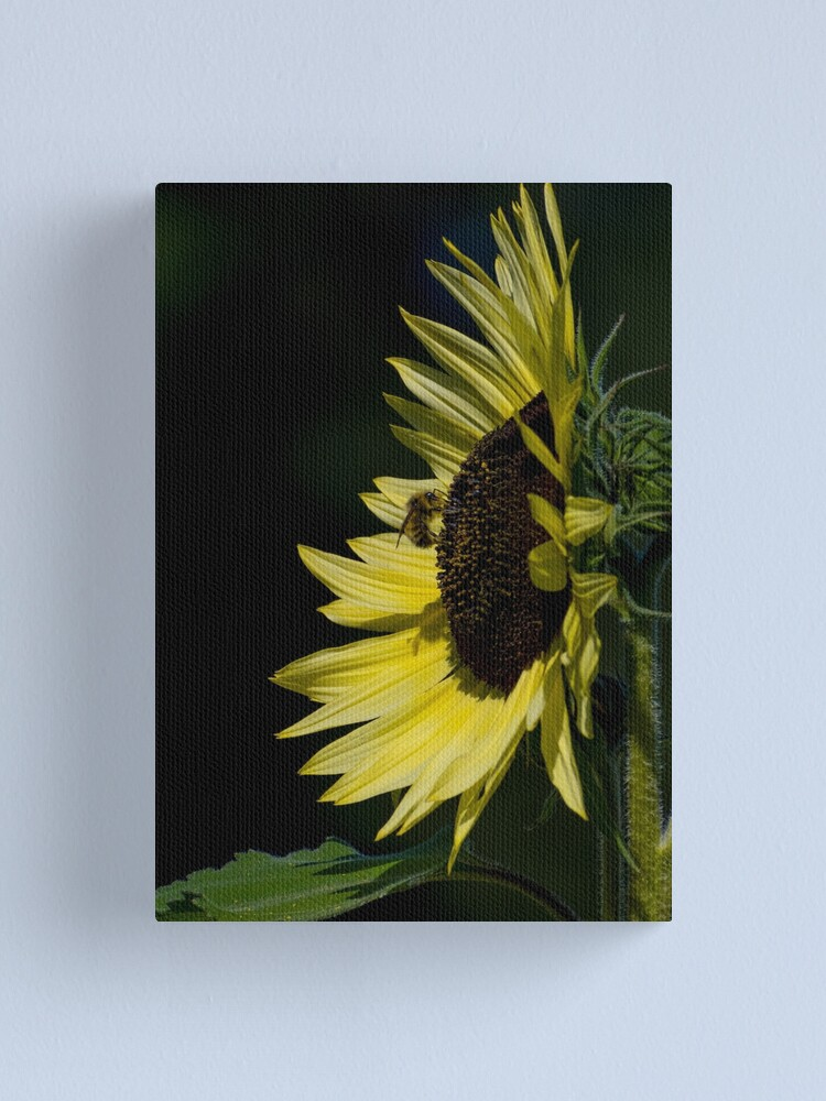 Alternate view of Yellow Sunflower N Bee Canvas Print