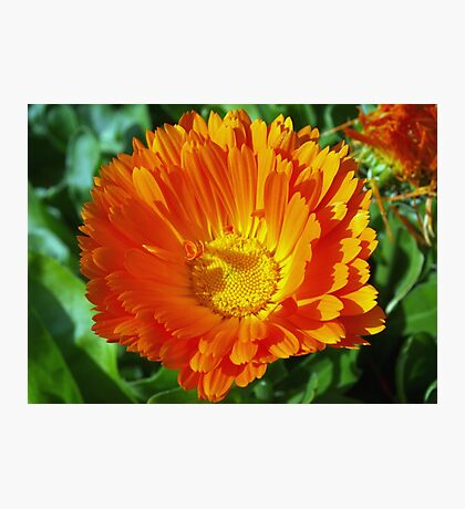 Orange lover's special Photographic Print
