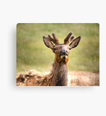 My New Antlers Canvas Print