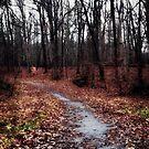 Shadowy Path by iheartdenver