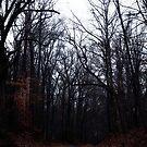 Into the Gloom by iheartdenver
