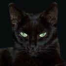 black cat by fuxart