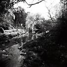 Merri Creek by KerrieMcSnap