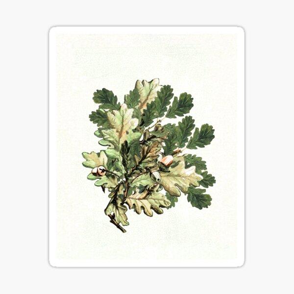 Oak leaf cluster with acorns Sticker