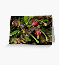 Grevillea masonii   Greeting Card