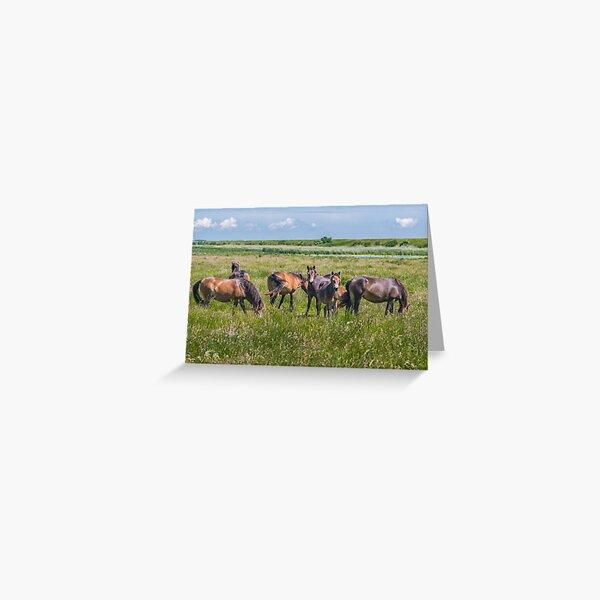 Wild horses enjoying Danish summer Greeting Card
