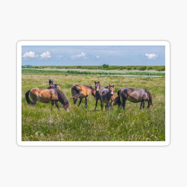 Wild horses enjoying Danish summer Sticker
