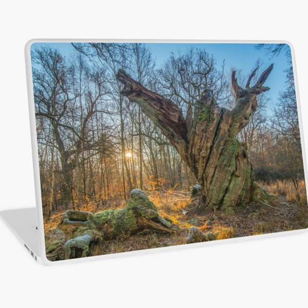 Sunrise with dying old oak - or a troll frozen in time Laptop Skin