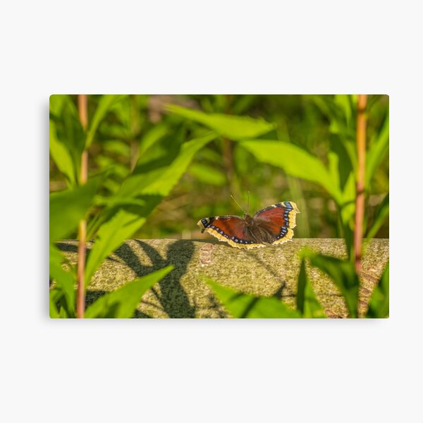 Butterfly in the forest: enchanting Mourning cloak Canvas Print