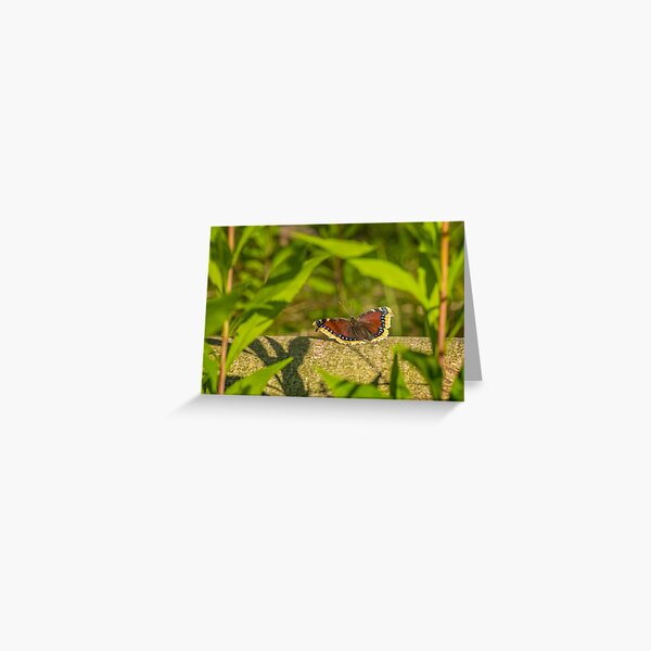 Butterfly in the forest: enchanting Mourning cloak Greeting Card