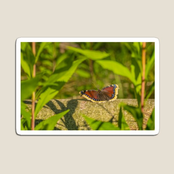Butterfly in the forest: enchanting Mourning cloak Magnet
