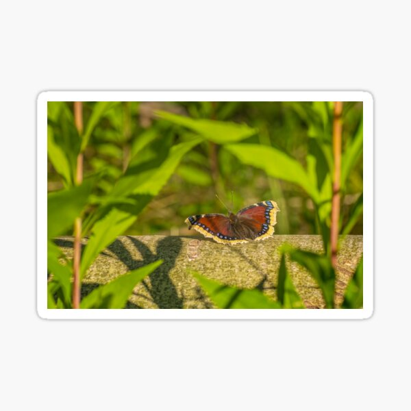 Butterfly in the forest: enchanting Mourning cloak Sticker