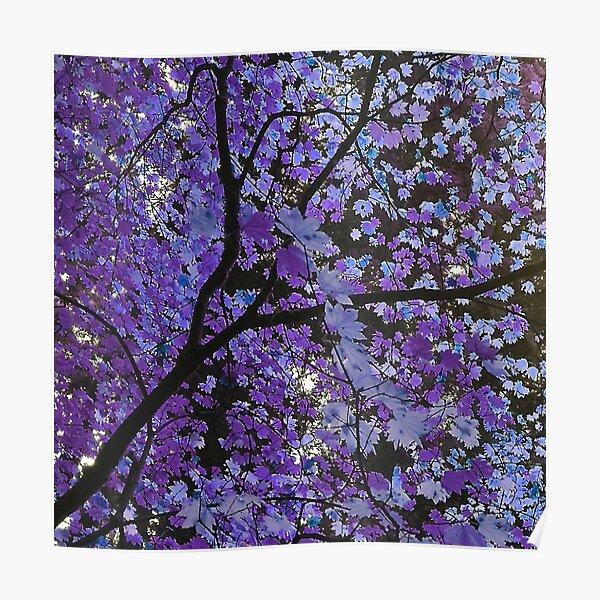 Purple Bliss  Poster