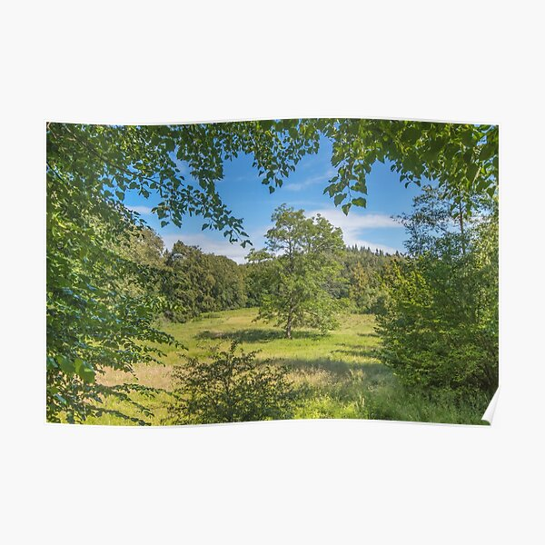 Idyllic clearing in the woods Poster