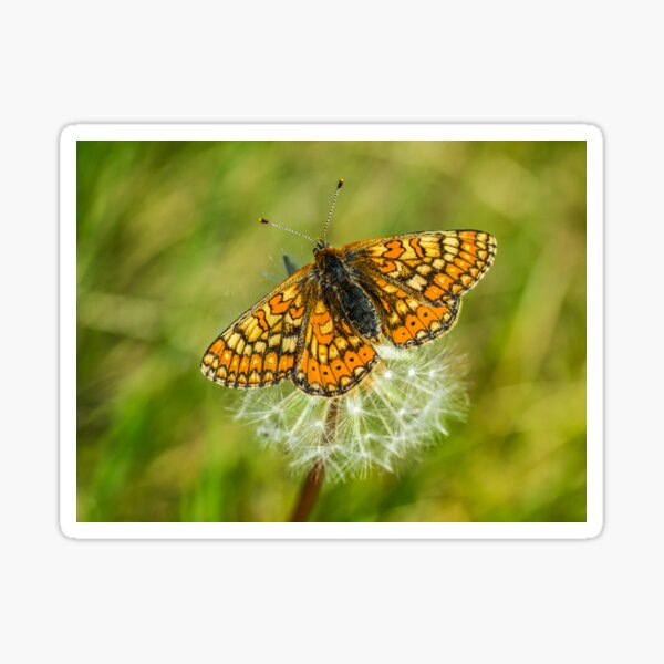 The marshland butterfly Marsh fritillary Sticker