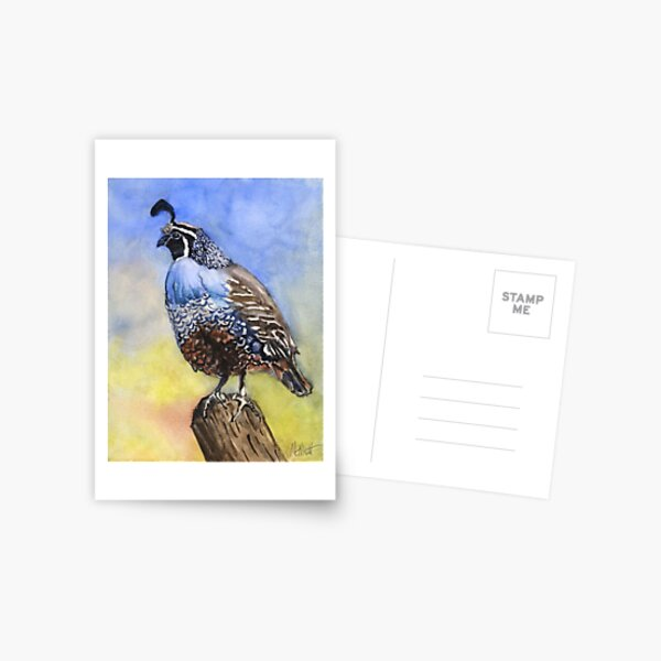 California quail Postcard