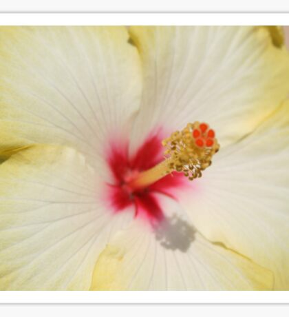 Beautiful Yellow Hibiscus Flower Sticker