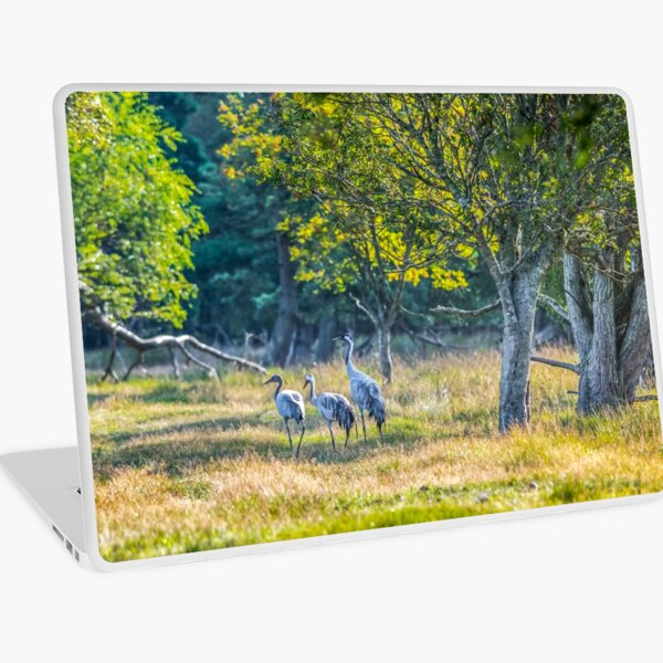 A family of cranes taking a morning stroll Laptop Skin
