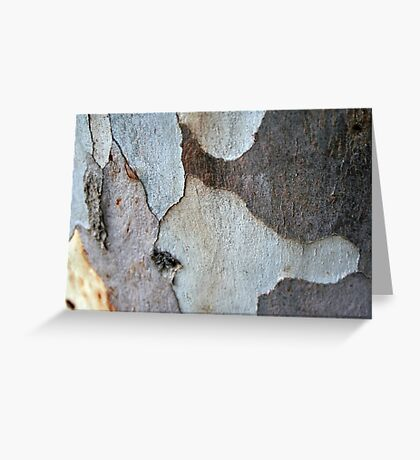 Peeling Bark Of A Eucalyptus Gum Tree Greeting Card