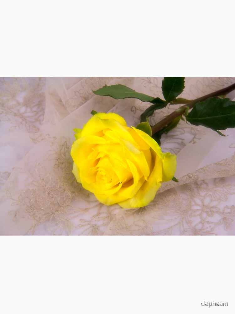 Yellow Antique Rose by daphsam