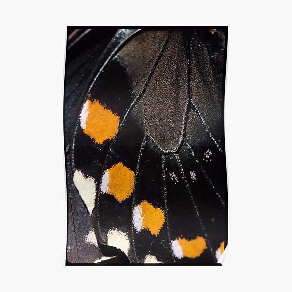 Spicebush Swallowtail Wing ECU Poster