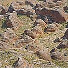 Flying over the Bungle Bungle domes, Kimberley by Margaret  Hyde