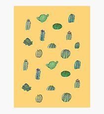 Comical Cacti Photographic Print