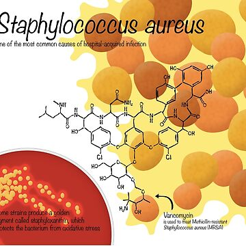 Staphylococcus aureus by thevexedmuddler