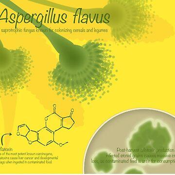 Aspergillus flavus by thevexedmuddler
