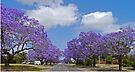 Jacaranda Blue, Grafton, NSW. by Margaret  Hyde