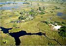 Aerial of Okavango Delta, Botswana (12) by Margaret  Hyde