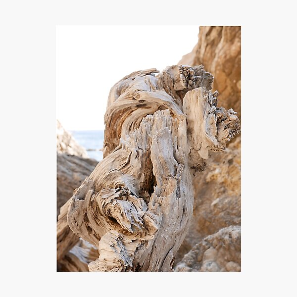 Dry tree trunk Photographic Print