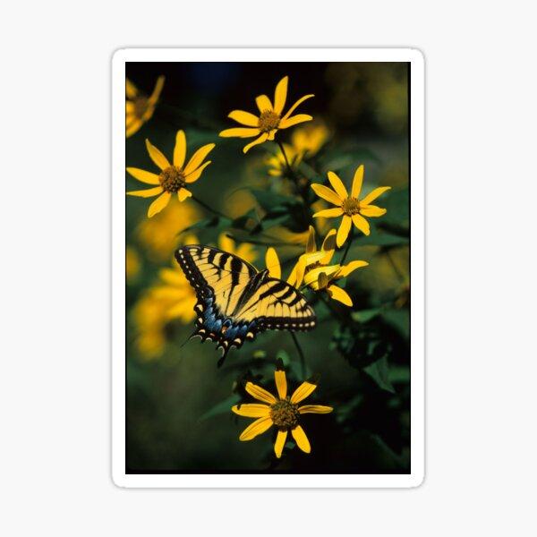 Tiger Swallowtail Butterfly Sticker