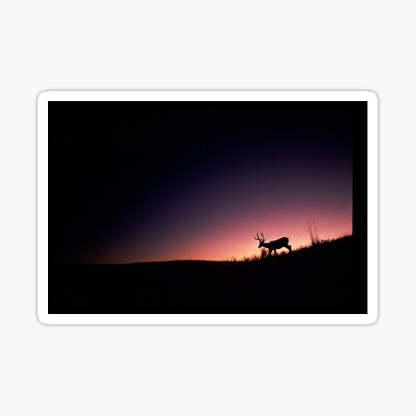 Mule Deer at Dawn Sticker