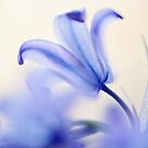 Blue Light. The Wild Hyacinth by JennyRainbow