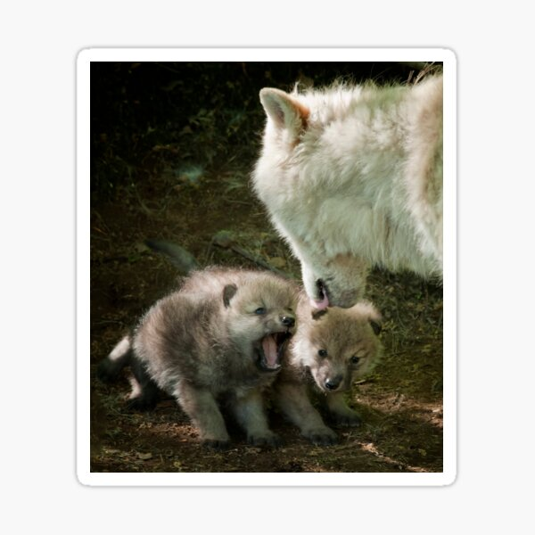 Arctic Wolf With Pup Sticker