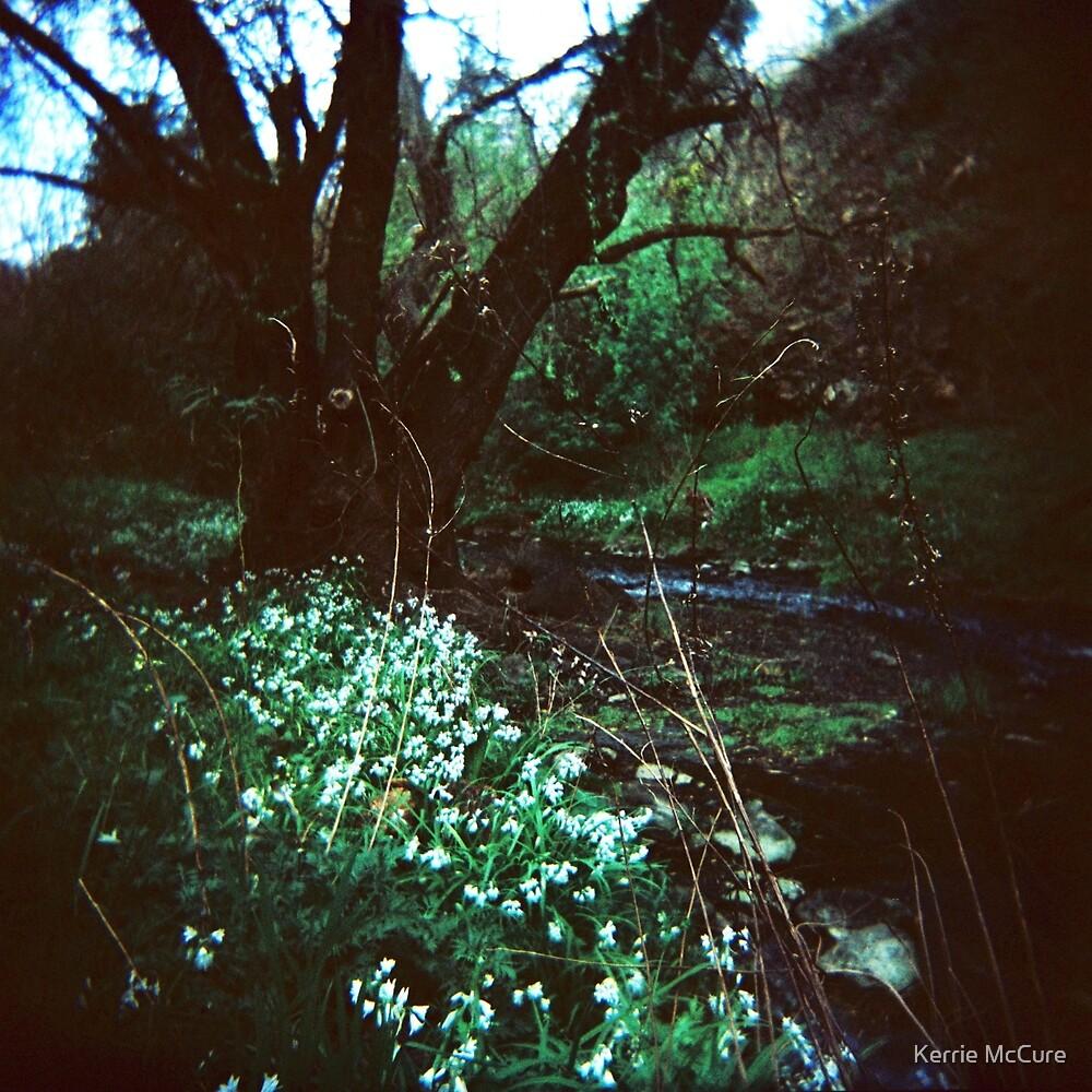 Enchanted by KerrieMcSnap