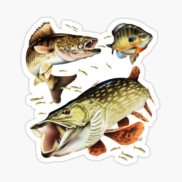 Walleye, Pike and Bluegill Sticker
