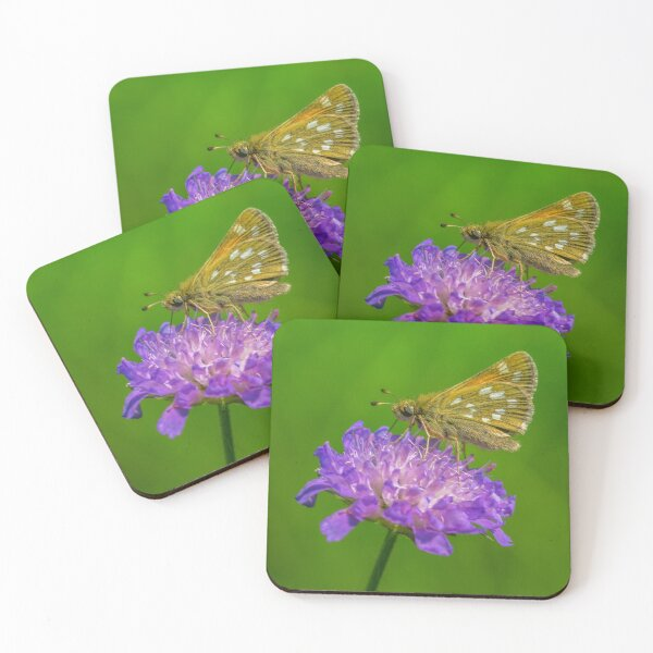 Silver-spotted skipper, a small butterfly on devil's-bit  Coasters (Set of 4)