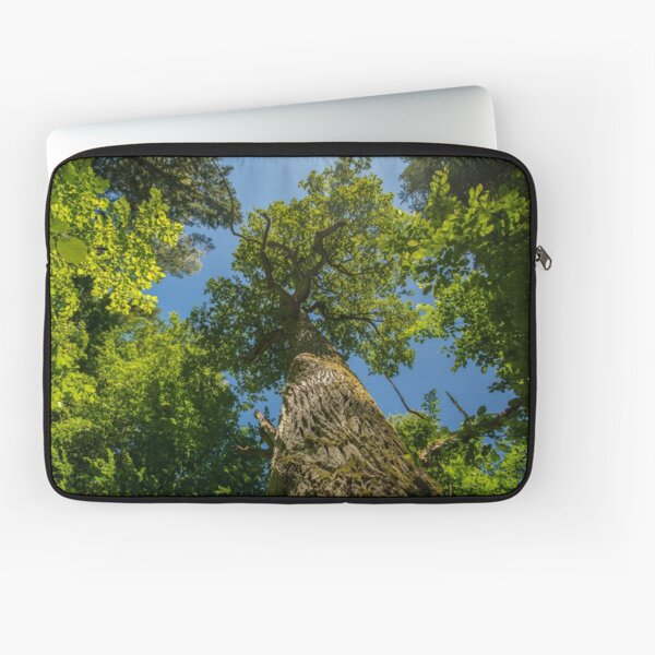 One of nature's majesties, the old oak Laptop Sleeve