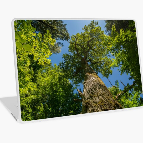 One of nature's majesties, the old oak Laptop Skin