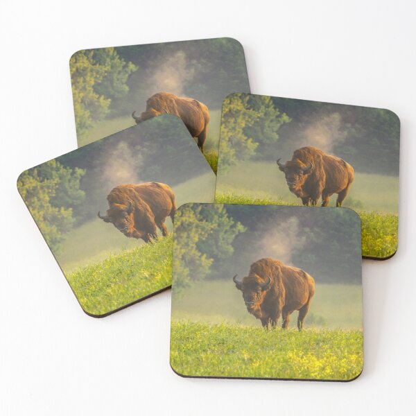 Wisent or european bison steaming in the morning light Coasters (Set of 4)