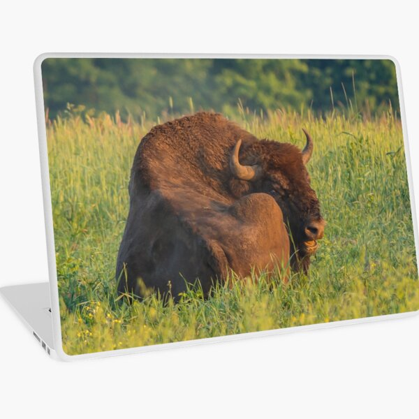 Laughing european bison, also known as wisent Laptop Skin