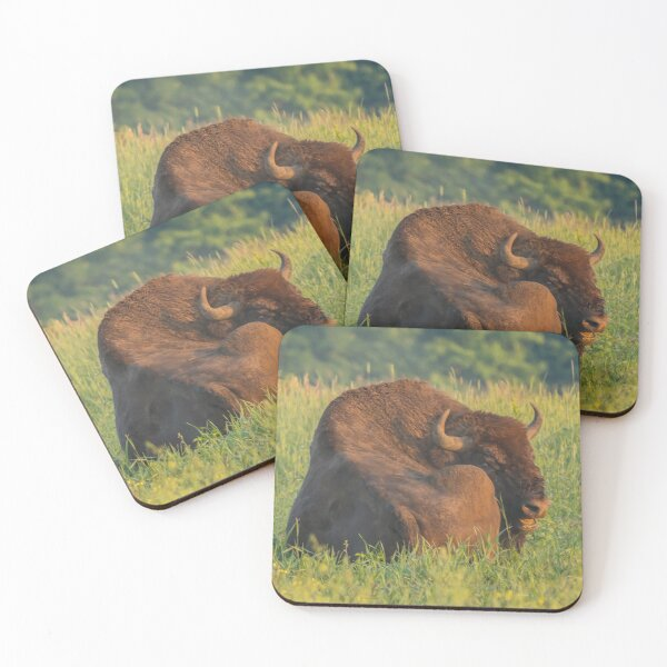 Laughing european bison, also known as wisent Coasters (Set of 4)