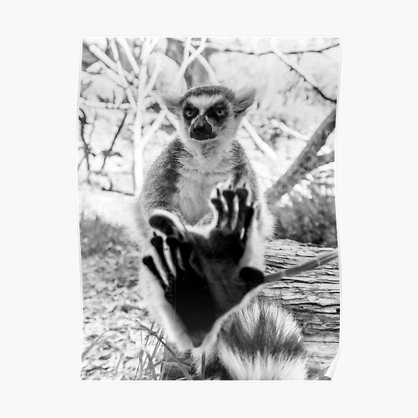 Lemur. Cool. Poster